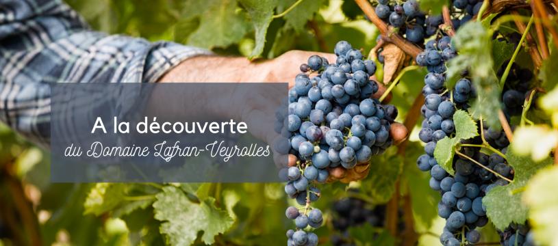 A la découverte du Domaine Lafran-Veyrolles