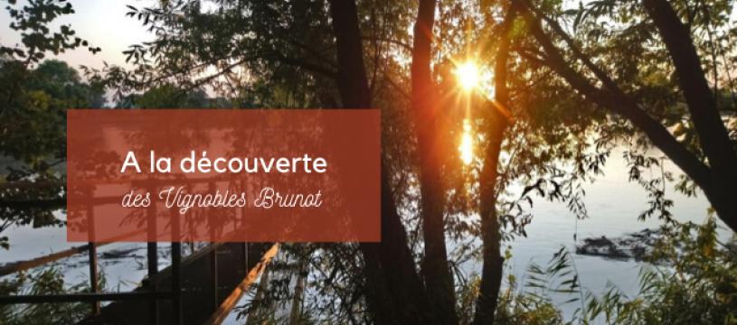 A la découverte du Vignobles Brunot